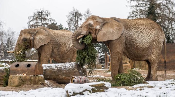 Tutsak edilen filin hortum darbesi sonucu, bir temizlik işçisi hayatını kaybetti