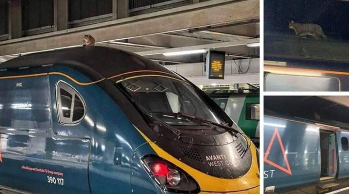 İngiltere'de kalkıştan önce trenin üzerinde fark edilen kedi 2,5 saatte indirilebildi