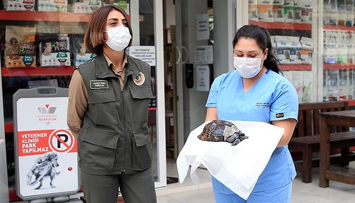 Antalya'da orman yangınından kurtarılan kaplumbağa tedaviye alındı