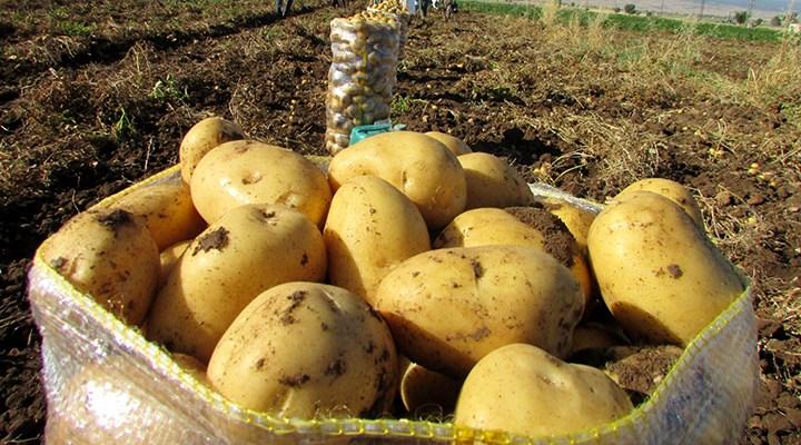 Niğdeli çiftçi: 4 kilo patates, 1 maske ediyor