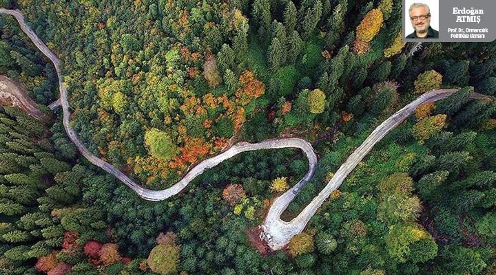 AKP döneminin orman bilançosu eksi veriyor: Algıyla orman yönetilmez