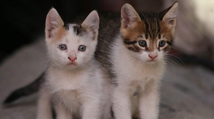Prof. Dr. Midilli uyardı: Koronavirüs hastaları evcil hayvanlardan uzak dursun