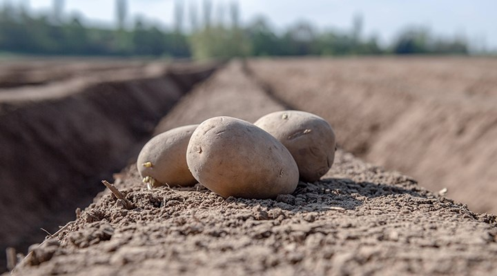 Çiftçiler tepkili: Devlet patates alımına iş işten geçtikten sonra başladı