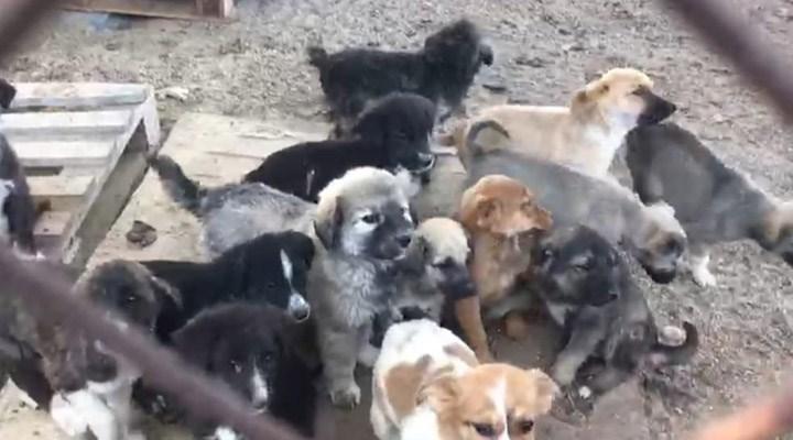Hayvan barınağında köpekler ölüme terk edildi