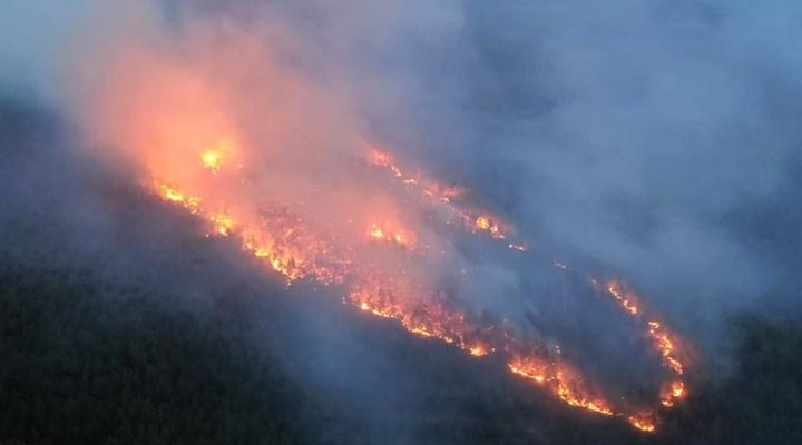 Muğla ve İzmir'de orman yangınları