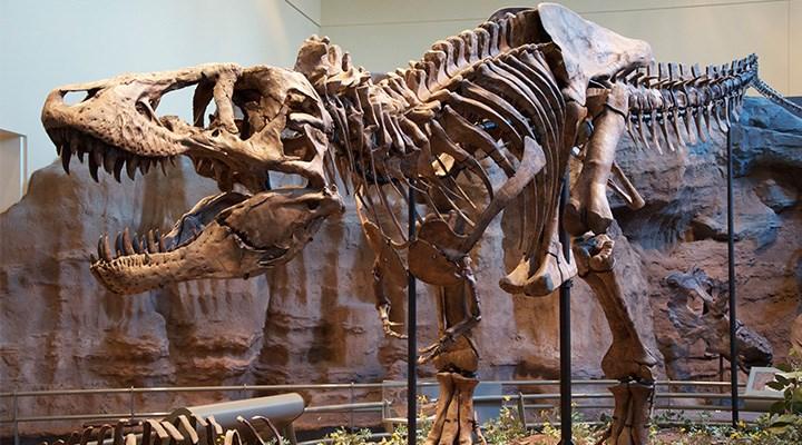 Yeryüzünde on milyarlarca T. rex yürüdü!