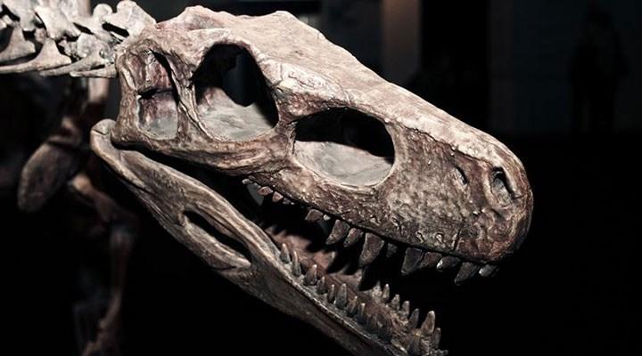 Şili'de yeni bir dinozor türü keşfedildi