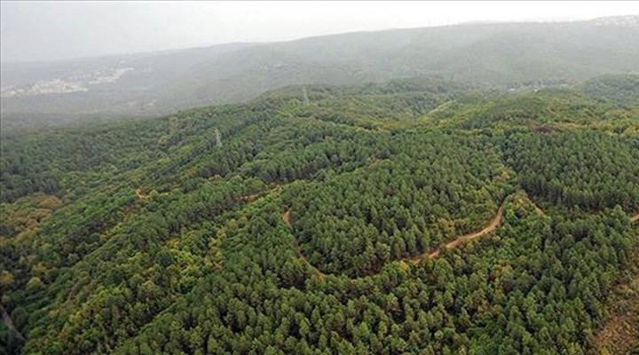 Kıyılar ve ormanlar AKP tehdidi altında