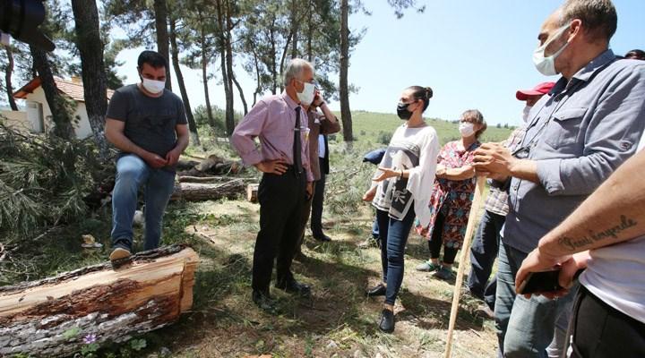 Efes Selçuk'ta çam ağaçları katledildi