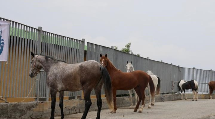 İBB'den kayıp at iddialarına yanıt