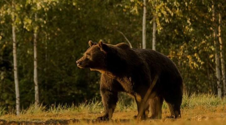"""""""Lihtenştayn PrensiEmanuel, Avrupa'nın en büyük boz ayısını öldürdü"""""""
