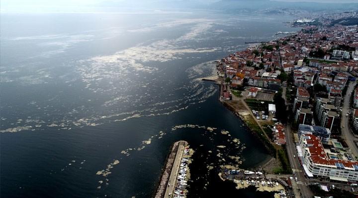 Marmara Denizi'ni etkisi altına alan 'salya' Mudanya sahilini de kapladı!