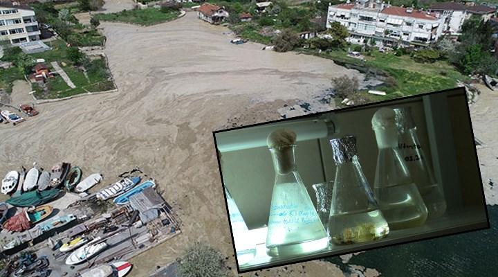 Marmara Denizi'nde salya araştırması: Dip ölümü bekliyoruz