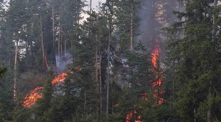 Ardanuç'ta orman yangını