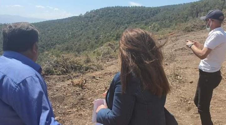 Denizli'de taş ocağı için 2200 ağaç kesildi