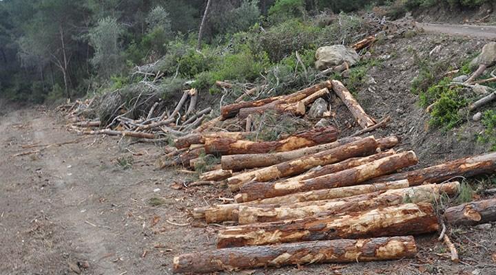 """Mersin'deki 'orman katliamı' yargıya taşınıyor: """"Özel şirketlere ucuz hammadde sağlamak için talan edildi"""""""