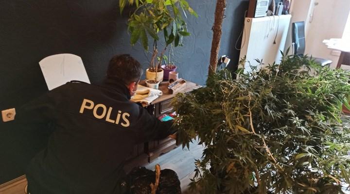 59 ilde evinde kenevir yetiştirenlere operasyon: 574 kişi hakkında gözaltı kararı