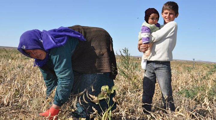 Tarım işçilerinin çalışma koşulları düzeltilmeli
