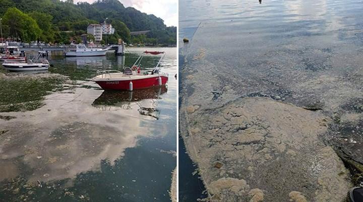 Deniz salyası Karadeniz'e de akmaya başladı