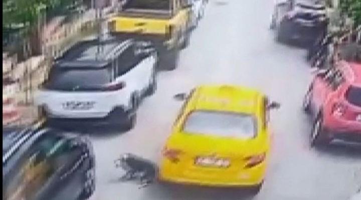 Eyüpsultan'da bir taksici, köpeği ezip can çekişmesini izledikten sonra kaçtı