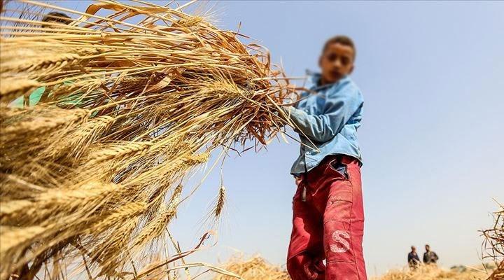12 Haziran Dünya Çocuk İşçiliğiyle Mücadele Günü: 'Türkiye'de 1 milyondan fazla çocuk işçi var'