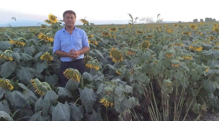 Sarıbal'dan ayçiçeği ithalatında gümrüklerin sıfırlanmasına tepki: Çiftçi umurlarında değil