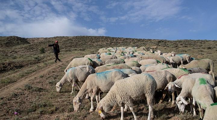 Anadolu'nun Afgan çobanları: Savaştan kaçıyor, başlık parası peşinde koşuyorlar