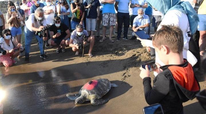 Muğla'da tedavileri tamamlanan caretta carettalar denize bırakıldı