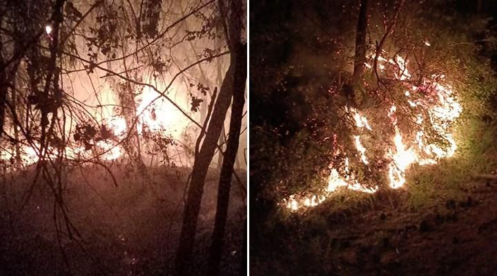 Adana'da orman yangını: 1 dekarlık alan küle döndü