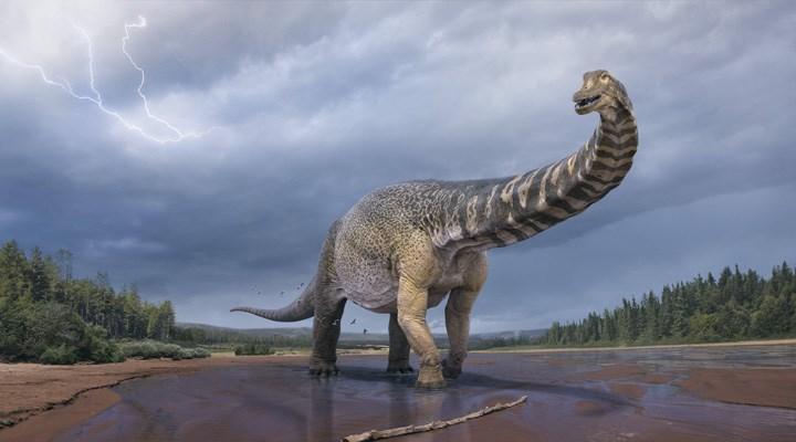 Tarihin en büyük kara memelilerine ait yeni fosiller bulundu