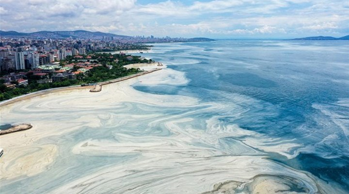 ODTÜ'den müsilaj incelemesi: Müsilaj oksijeni 2,5-3 saatte tüketti, Güney Marmara'da risk biraz daha fazla
