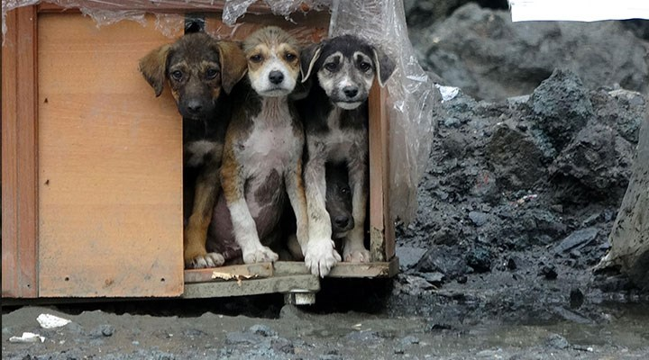 """""""Hayvanları Koruma Kanunu"""" teklifi Meclis'te: Teklifin detayları neler?"""