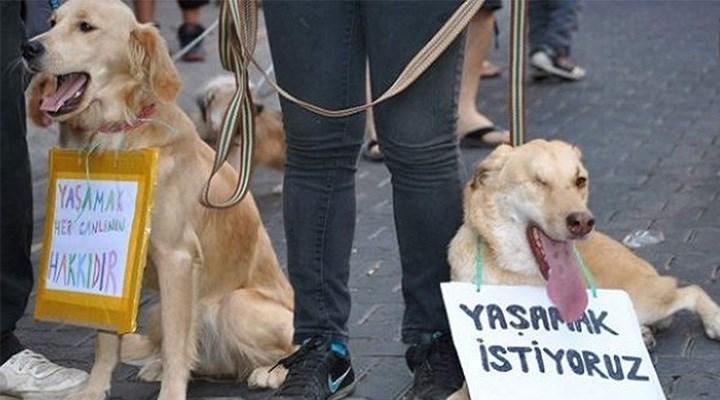 Teklif, can dostları korumada yetersiz: Yasanın önceliği hayvan hakkı olmalı