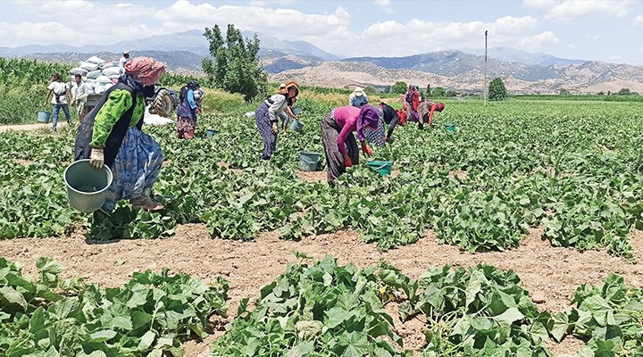 Mevsimlik tarım işçileri ekmeğinin peşinde