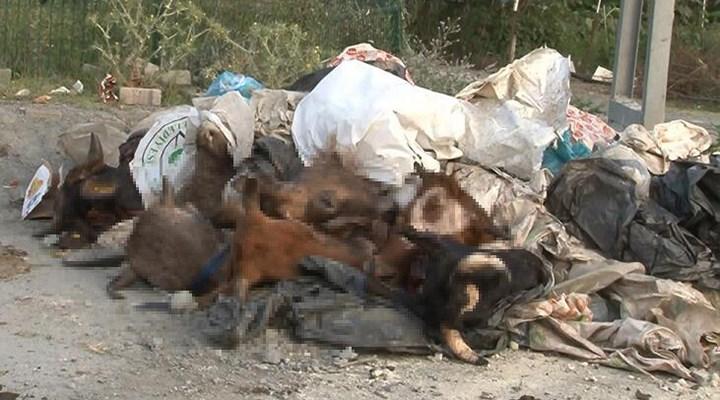 İstanbul'da yola onlarca kesik hayvan kafası atıldı