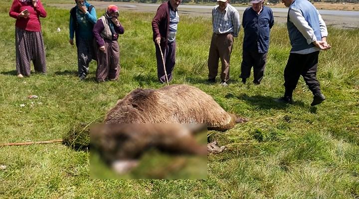 Bolu'da silahla vurulan boz ayı, kaçtığı gölde boğularak can verdi