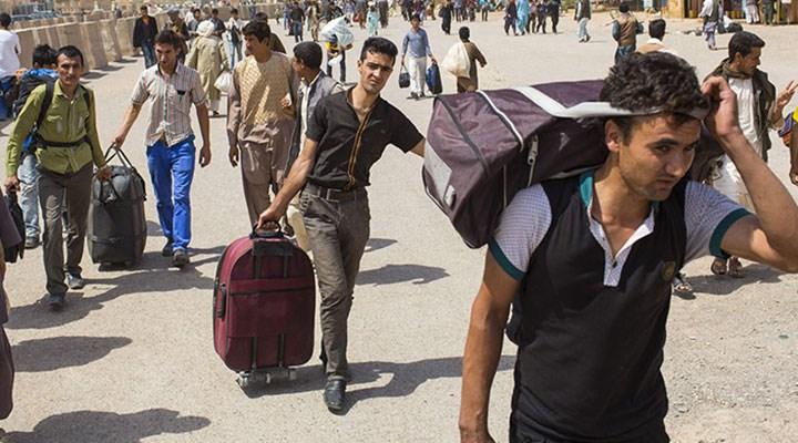 Saray bekâsı için göçü kullanıyor