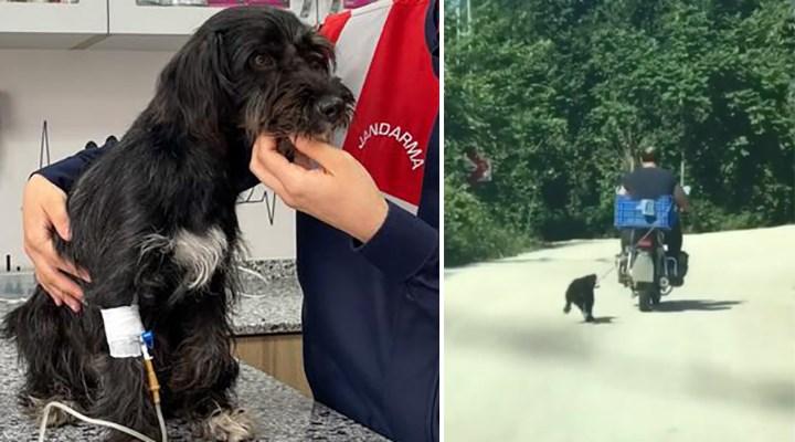 Motosikletin arkasına bağladığı köpeğe eziyet eden adam yakalandı