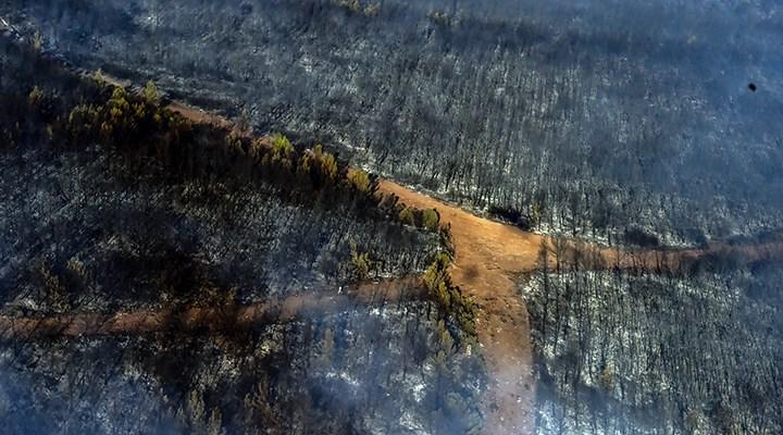 Marmaris'in ormanları küle döndü