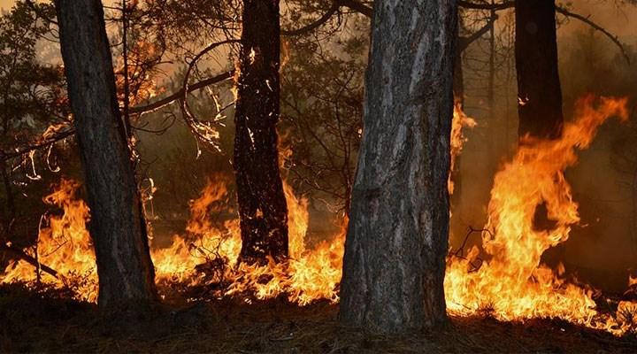 Sağlık Bakanı Koca'dan yangınlardaki son duruma ilişkin açıklama
