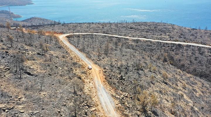 Bodrum ve Milas'ın yeşili yangına kurban gitti