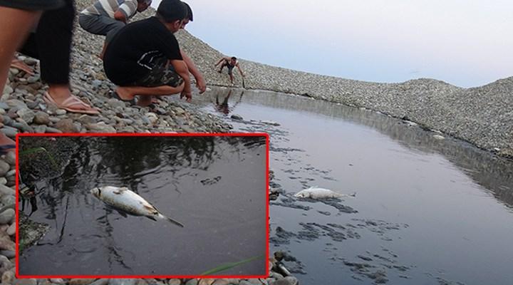 Bozyazı'da toplu balık ölümlerine inceleme başlatıldı