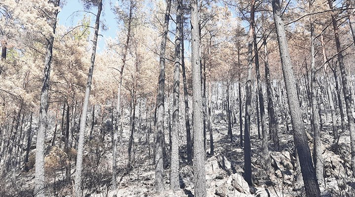 Yangın tüm varlıklarını küle çevirdi