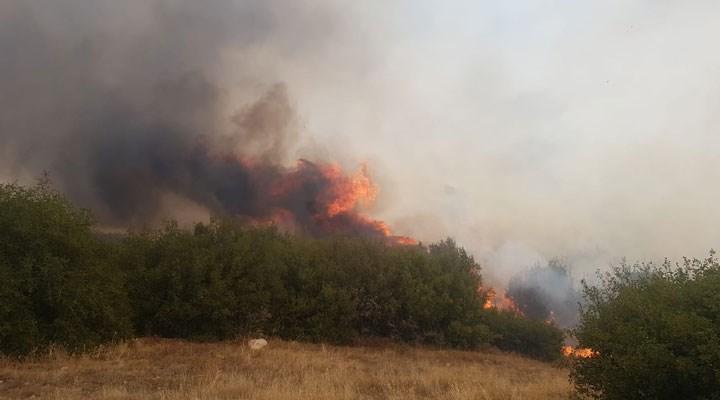 Manisa Kula'da orman yangını