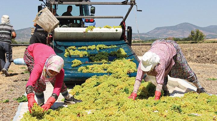 Üzüm üreticisi fiyat bekliyor