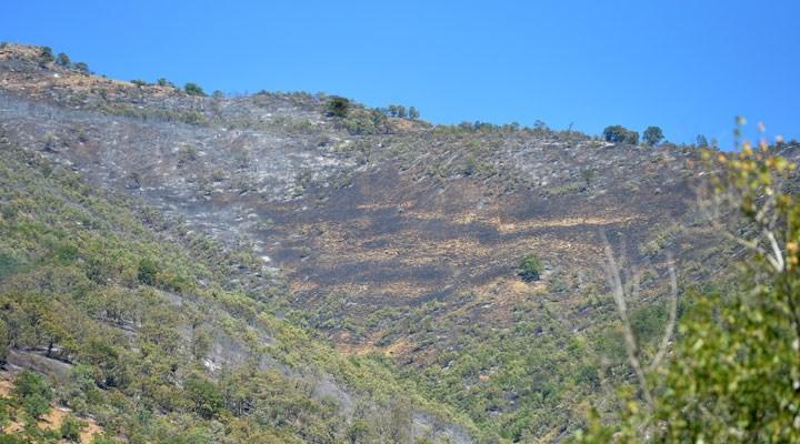Dersim'de yangın kontrol altına alındı, Bitlis ve Bingöl'de müdahale sürüyor