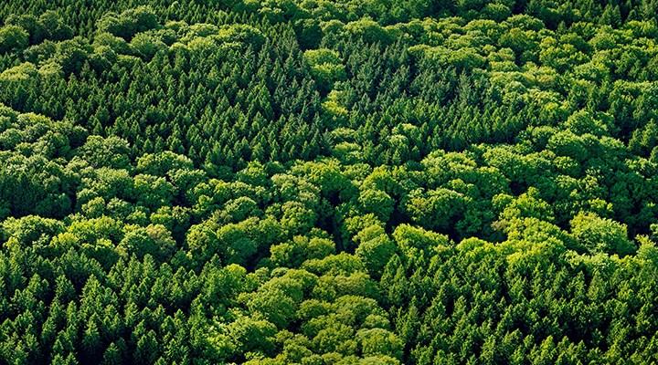 Her üç ağaç türünden biri yok olma tehlikesiyle karşı karşıya