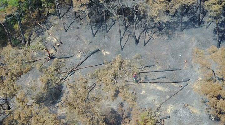 Heybeliada'da 1700 ağaç yandı; Yeşillendirme çalışması başladı