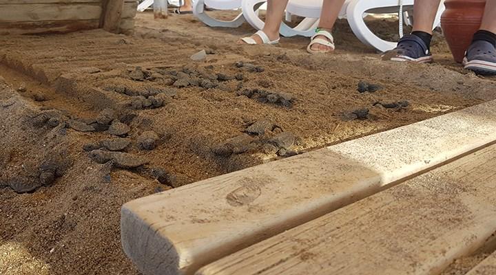 Caretta caretta yuvalarının üzerine yürüme bandı koyan otellere 482 bin lira ceza kesildi