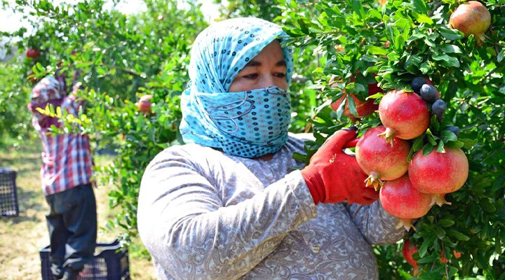 Suçlu çiftçi değil AKP'nin politikası